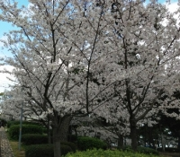 須磨浦公園.jpg